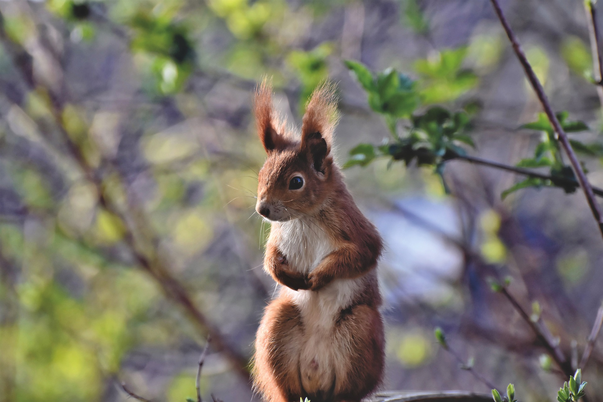 squirrel-5033827_1920